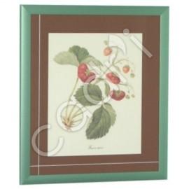 Botanique : Fragaria Hybrid (Auteur Inconnu) - 408x348 mm